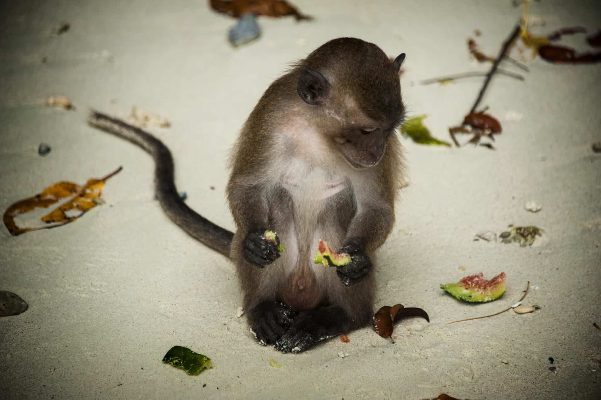 Monkey Beach - O macaco que me tentou assaltar