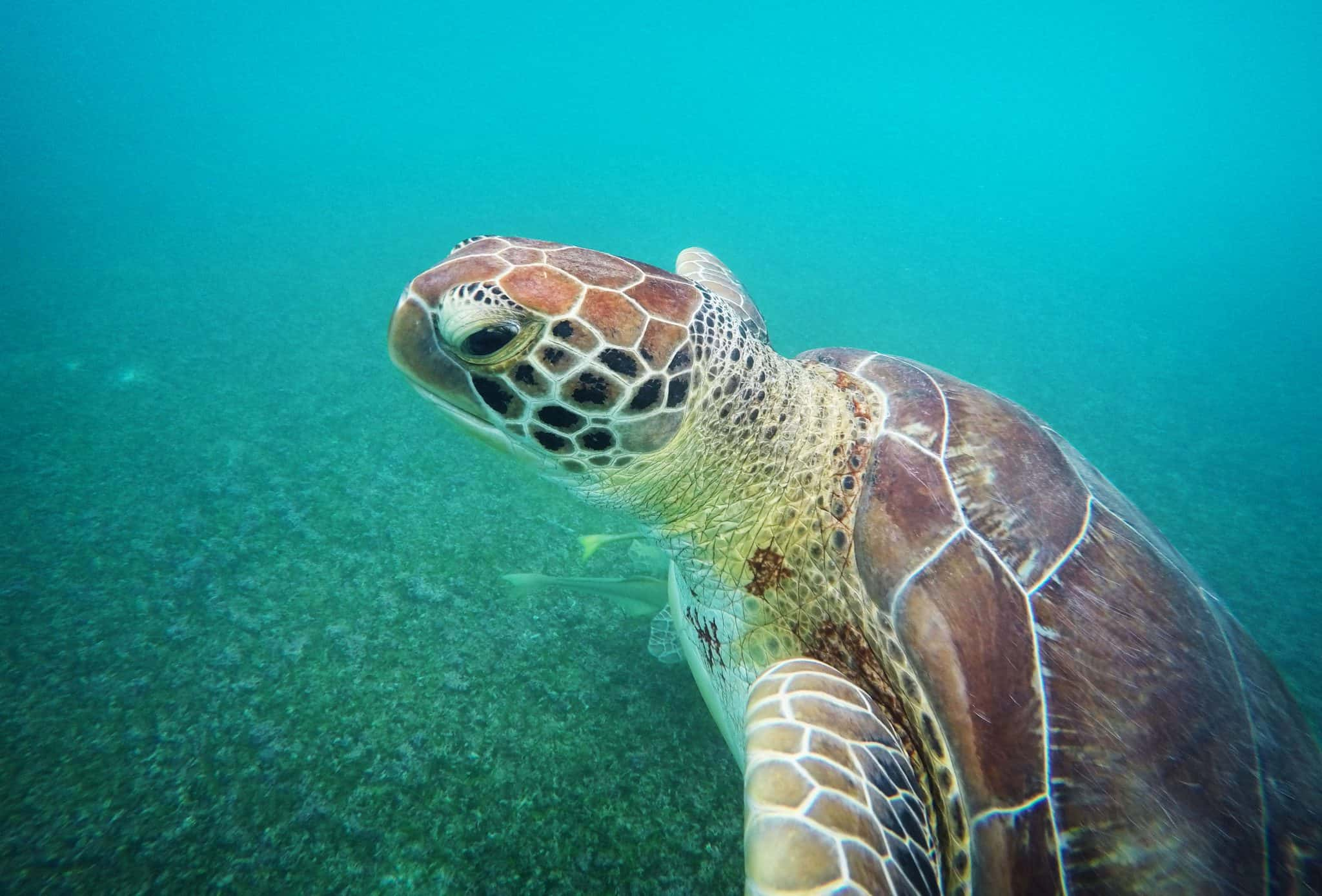 Uma belíssima tartaruga no mar de Akumal